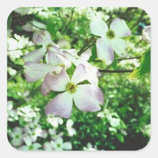 Spring Dogwood Square Sticker