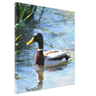 Spring Duck Gallery Wrapped Canvas