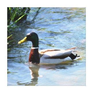 Spring Duck Canvas Print