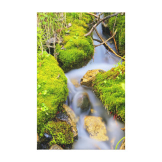 Spring Fed Mountain Stream Stretched Canvas Prints