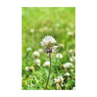 Spring Flower Stretched Canvas Prints