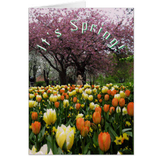 Spring Flowers and Blossom Cherry Tree Custom Text Card