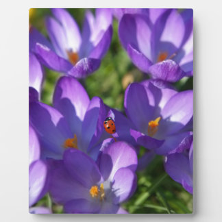 Spring flowers and ladybug plaque