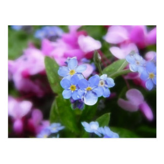 Spring Flowers - Forget Me Nots And Redbuds Postcard