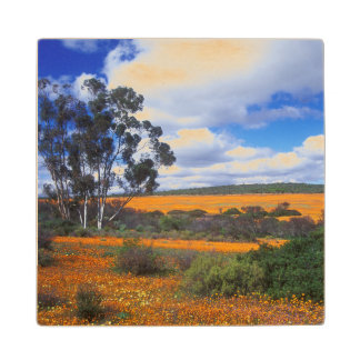 Spring flowers in Namaqualand, South Africa Wood Coaster