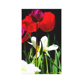 Spring Flowers in red canvas print