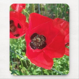 Spring Flowers Mousepads