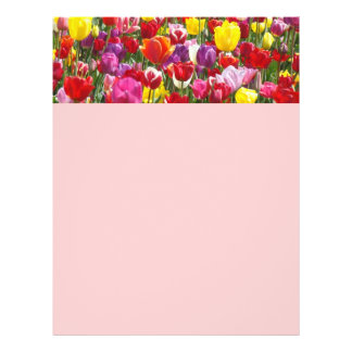 Spring Flyer's paper Themes Tulip Flowers Nature