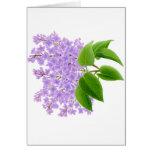 Spring Garden Lilacs Card