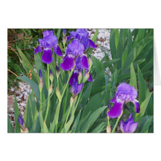 Spring Garden of Irises Blank Inside Note Card Greeting Card