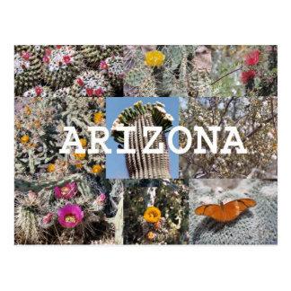 Spring in Arizona Postcard