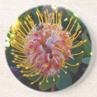 Spring in Australia 1 Coaster