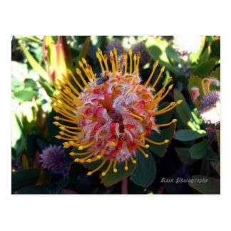 Spring in Australia 1 Postcard