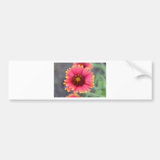 Spring in Bloom Bumper Sticker