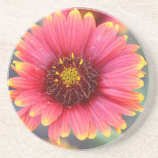 Spring in Bloom Coaster