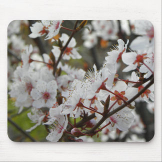 Spring in Canberra Mouse Pad