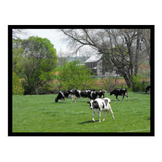 ~ Spring in Lancaster County ~ 47 Postcard