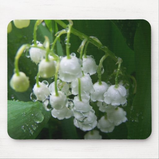 Spring In Maine Mouse Pad