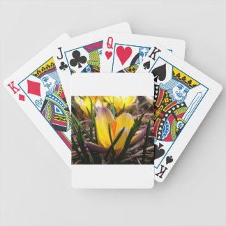 Spring in the air, Crocus are blooming! Bicycle Playing Cards