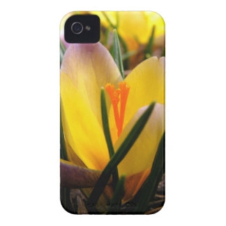 Spring in the air, Crocus are blooming! Case-Mate iPhone 4 Case