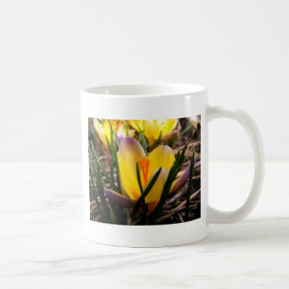 Spring in the air, Crocus are blooming! Coffee Mug