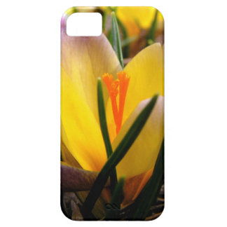 Spring in the air, Crocus are blooming! iPhone 5 Cover