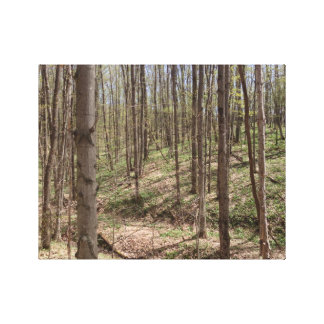 Spring in the Woods of Northern Michigan Canvas Prints