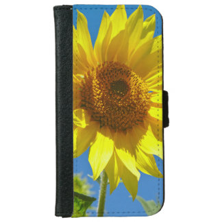 Spring is here! - Springtime sunflowers iPhone 6 Wallet Case