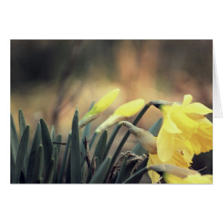 Spring is in the air! greeting card