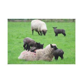 Spring Lamb and Sheep Canvas Print