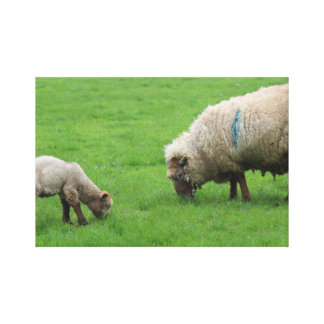 Spring Lamb and Sheep Canvas Print
