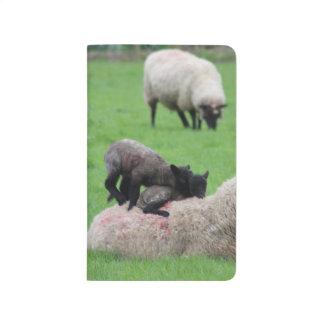 Spring Lamb and Sheep Journal