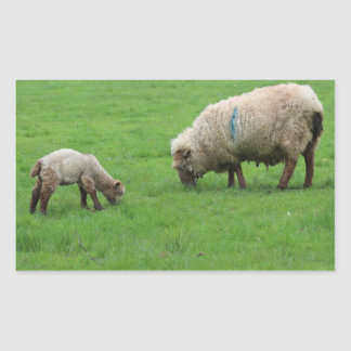 Spring Lamb and Sheep Rectangular Sticker