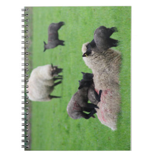 Spring Lamb and Sheep Spiral Notebook