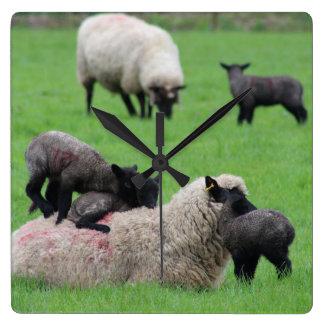 Spring Lamb and Sheep Wall Clock