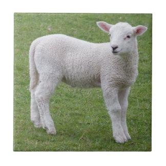 Spring lamb ceramic tile