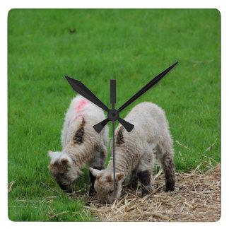 Spring Lambs Clock