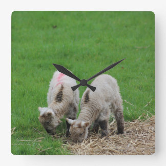 Spring Lambs Square Wall Clock