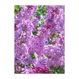 Spring Lilacs Canvas Print