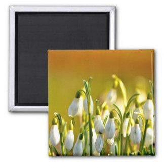 Spring - Magnet