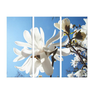 Spring Magnolia Tree Flowers Canvas prints