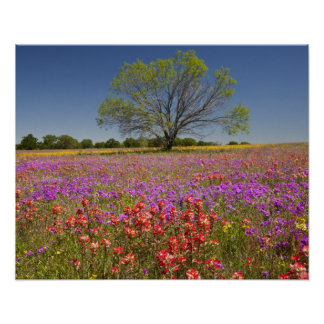 Spring mesquite trees growing in wildflowers, poster