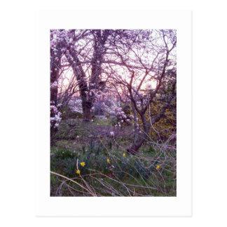 Spring Morning Postcard