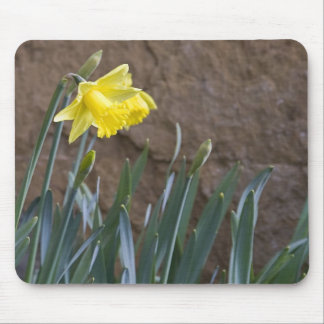 Spring! Mouse Pad
