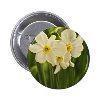 Spring Narcissus (Daffodil) Flower Photograph 6 Cm Round Badge