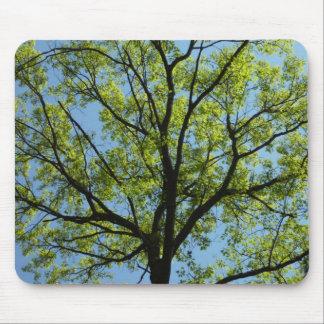 Spring Oak Tree Nature Scene Mouse Pad