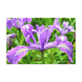 Spring Of Purple Stretched Canvas Prints