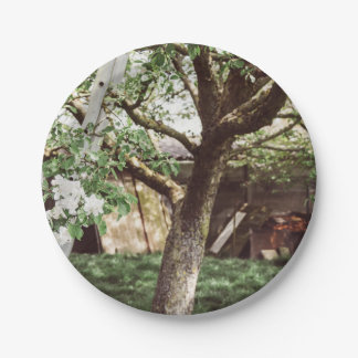 Spring Orchard With Ladder Against Tree 7 Inch Paper Plate