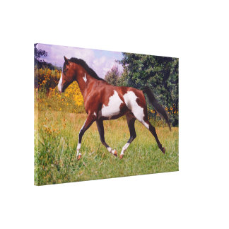 Spring paint horse Stretched Canvas Print
