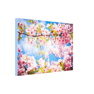 Spring Pink Cherry Blossoms Nature Canvas Canvas Print